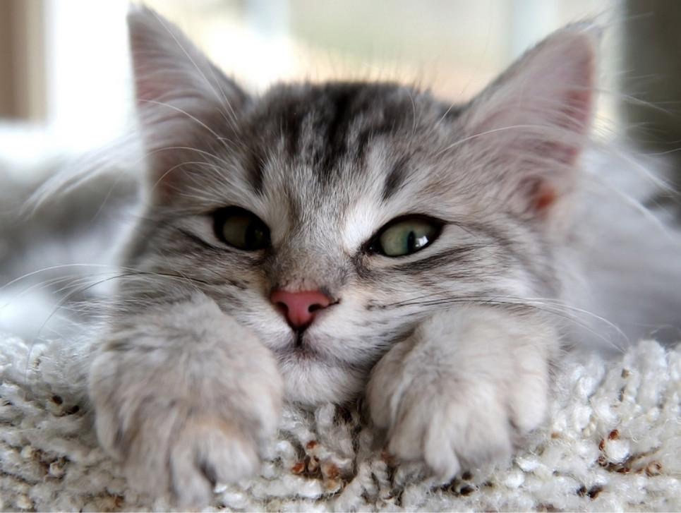 free-cat-paper-sm